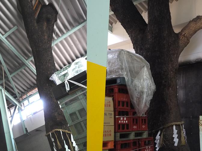 蔵の中の大木