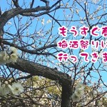 もうすぐ春♪「梅酒祭りin太宰府天満宮」に行ってきました。