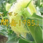 鹿児島県 萬世酒造より、本格とうもろこし焼酎「野間岳1985」発売