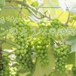 山口県 永山酒造より、本格米焼酎「寝太郎 風ほのか」発売