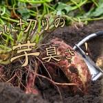 鹿児島県 丸西酒造より、本格芋焼酎「蓬原(ふつはら)新酒無濾過」が限定発売」